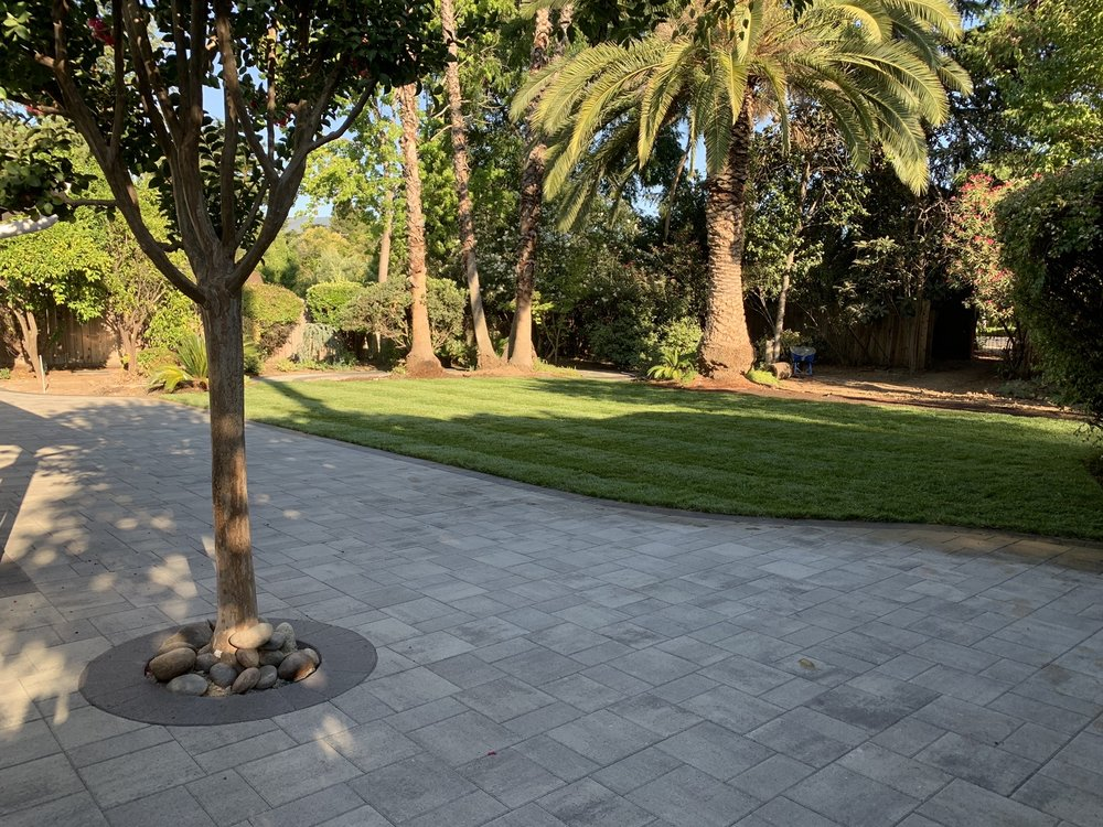 Classy paver patio installation with edged lawn and tree